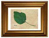 Herbarium from pressed and dried leaves of plantains  (Plantago) in the frame poster