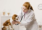 Serious veterinarian examining dog and listening with stethoscope during checkup poster