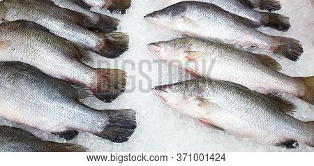 Fresh  Asian Sea Bass, Lattice Or Barramundi Fish Freezing On Ice For Sale At Seafood Market Or Supe