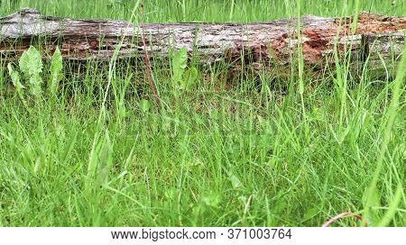 Old Username Green Grass. Dry Old Log In The Grass Lies