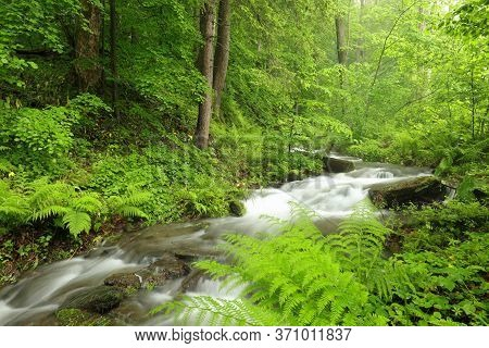 Forest stream Nature background landscape river Nature background Nature landscape brook Nature background spring Nature green landscape trees water Nature landscape foliage landscape waterfall Nature background Nature landscape woods Nature background.