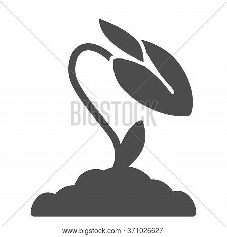Flower Bud Solid Icon, Floral Concept, Rose Closed Blossoms Sign On White Background, Rose Flower Bu