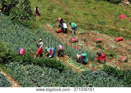 Nuwara Eliya, Sri Lanka. Circa 2016. A Group Of People Work In The Farm Lands On A Daily Wage In A R