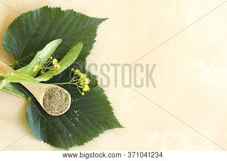 Top View Lime Trees, Or Lime Bushes, Linden And Basswood Leaves. Dry Tilia In Spoon To Prepare Hot I