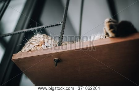 Close-up View Of Cute Domestic Kitty Cat Sleeping And Resting