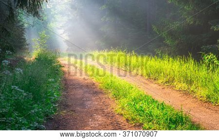 Misty Forest Path With Sunbeams Through Trees. Spring Travel Background. Beautiful Natural Scene In