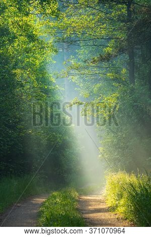 Sunbeams In Forest. Sun Rays In Forest. Woodland With Sunlight. Scenic Sunny Landscape With Path In