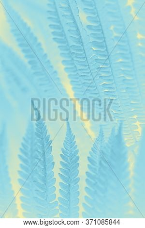 Frosty Patterns On The Glass Are Tinted In Bed Colors. Tinted Background In Cold Winter Colors In Th