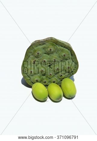 Indian Lotus Head Or Nelumbo Nucifera Head With Seed Isolated On White Background