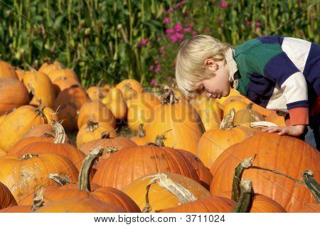 Choosing The Perfect Pumpkin