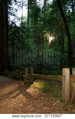 Hiking Trail With Sun Rays Through Redwood Trees In Armstrong Redwoods State Natural Reserve In Cali