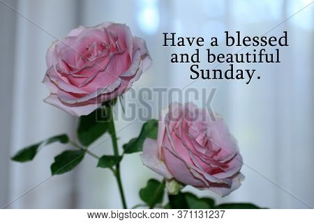 Happy Sunday Card Greeting With Beautiful Pink Roses Blossom On White Background. Sunday Morning Tex