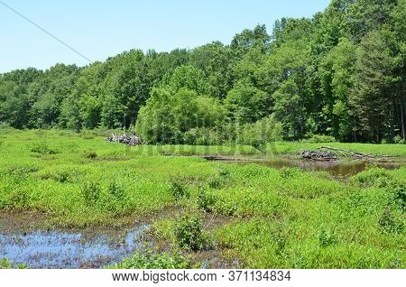Beaver Lodges And Sticks And Water And Plants