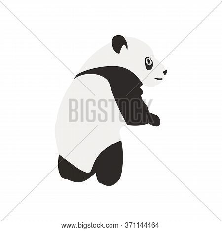 Stylized Young Very Cute Panda Full Body Drawing. Vector Illustration In Flat Style, Isolated On Whi