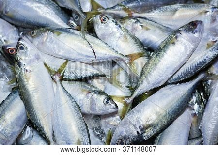 Fresh Mackerel Fish In Market , Sea Fish Mackerel Pile Top View, Background Top View Fresh Mackerel,