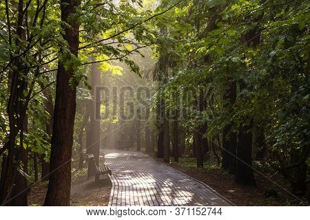 Alley In The City Park After The Rain, Through The Leaves Break Through The Beautiful Rays Of The Ev