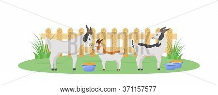Goats In Garden Flat Color Vector Character. Feeding Bowl For Cattle In Backyard. Farmland With Fenc
