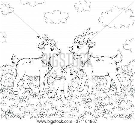 Small Kid With A Nanny Goat And A He-goat Walking On Fresh Grass Of A Pretty Summer Field With Wildf