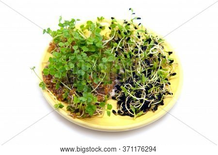 Sprouting Seeds Of Black Cumin And Seeds Of Garden Cress In Bowl Isolated On White Background. Diet