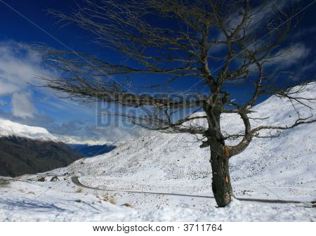 High Altitutde Tree In The Snow