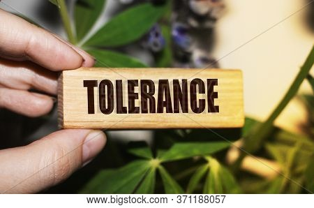 Tolerance Word In Wooden Block In Hand On Greenery Background