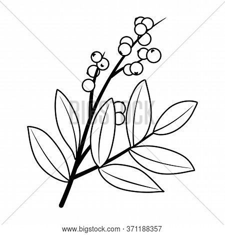 Winter Berry Branches Element Illustration. Beautiful Texas Winter Berry Red Fruits On Tree Branches