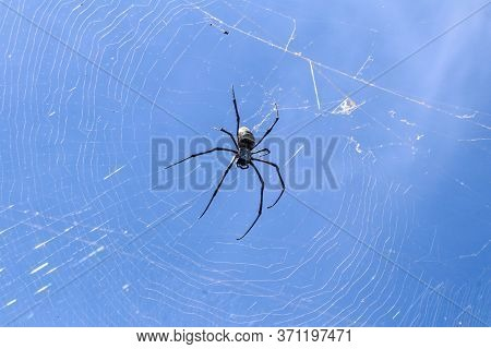 Close Up Of Big Spider On Spider Net On Bali Island. Against The Background Of An Azure Blue Sky Lit