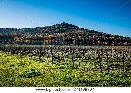 Vineyards With In The Background The Remains Of The Torre Di Donoratico Near Castagneto Carducci, In