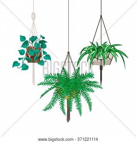 Vector Set Of Decorative Hanging Houseplants Isolated On White Background. Bundle Of Trendy Macrame