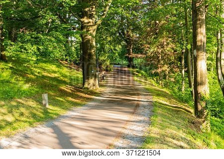Spring Forest With Sunbeam And Smooth Light. Empty Forest Path With No People. Tranquil Scene, Natur