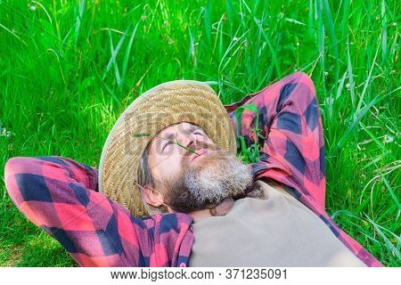 Bearded Man Lying On Grass. Happy Relaxed Male In Checkered Shirt And Hat Lying On Green Grass. Happ