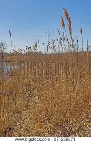 Tall Grass Prairie By A Pond In The Midewin National Tallgrass Prairie In Wilmington, Illinois