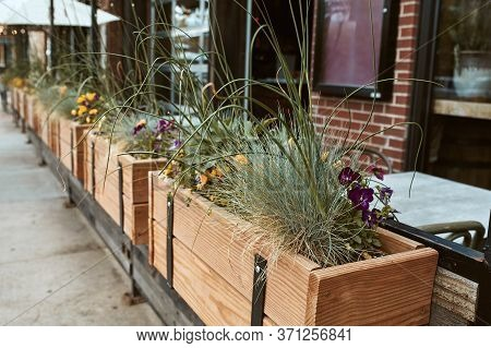Wooden Planter Box Filled With A Variety Of Plants And Flowers Along Pearl Street Mall.  Boulder, Co