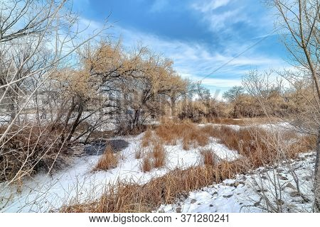 Brown Grasses And Trees With Leafless Branches On Snow Covered Land In Winter