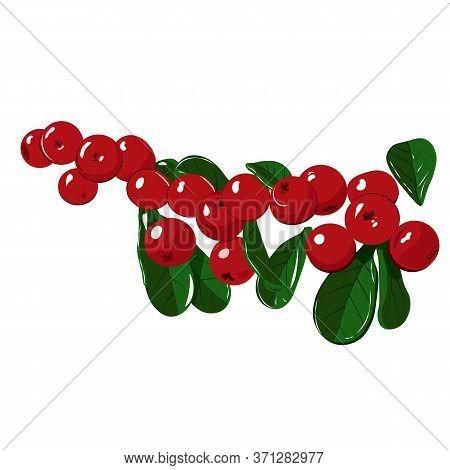 Wild Berry Cranberries (vaccinium Vitis-idaea). Ripe Wild Lingonberries. Wild Berry Cranberries. Lin