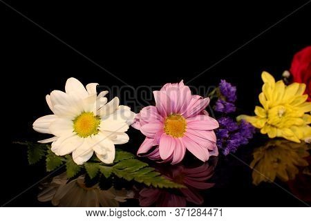 Beautiful Multicolored Flowers On A Black Background