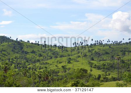 Beautiful landscape in Island Rinca