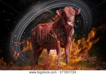 Symbol Of Bull To Taurus Of Zodiac And Horoscope Concept. Star Cluster In Constellation The Bull. El