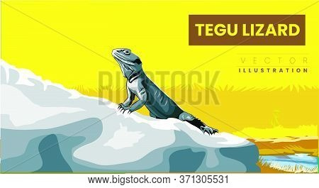 Close, Side View Of A Tegu Lizard (tupinambis), Looking Far Away, On A Rocky Ground Vector Illustrat