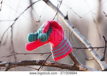Forgotten Children Glove. Glove On A Tree Branch