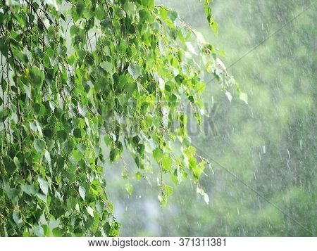 Natural Cataclysm. Thunderstorm, Heavy Hail, Sleet Showers In Summer. Green Branches In A Hurricane