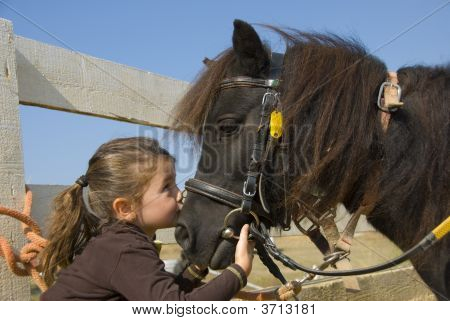 little girl kissing her pony, a  purebred shetland, on the nose poster