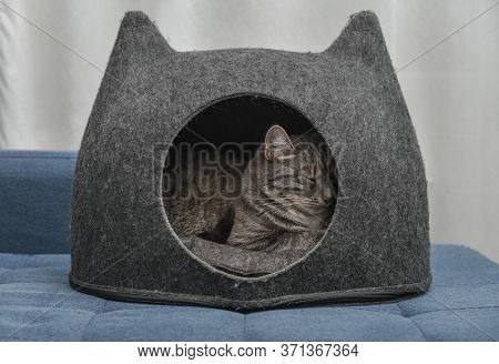 Cat Sleeping In The Small House, Cat Condo