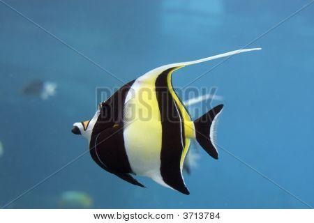 Idofish