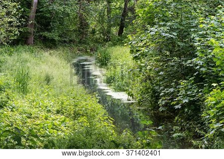 Calm Brook Flows Through A Green Forest Meadow, Idyllic Nature Landscape In Spring And Summer, Copy