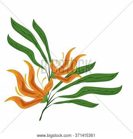Jungle Leaves And Flowers Vector Image. Forest Nature Plant. Isolated Element For Design Concept. Be