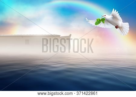 White Dove Flying With Olive Leaf In Its Beak. Noah's Ark Bible Story Theme Concept.