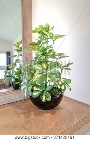 Ornamental Potted Plant On The Vanity Cabinet Against Mirror And White Wall