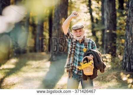 Aged Man Pick Flowers In Basket. Portrait Of Aged Man With Beard. Funny Grandfather In Hat In Forest