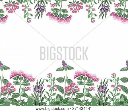 Vector Floral Seamless Border With Flowers And Culinary Spicy Herbs.  Rosemary, Thyme, Mint, Oregano